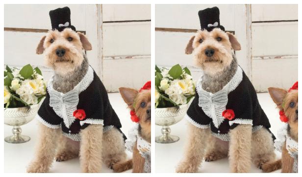 Puppy Barking Groom Tuxedo And Top Hat Free Crochet Pattern