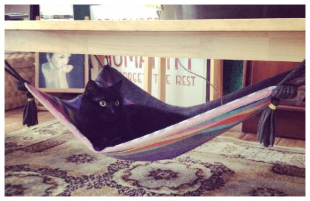 No Sew Magic Fabric Cat Hammock DIY Tutorial